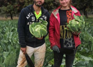 ausveg-who-will-pick-the-crops